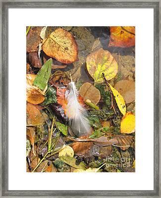 Framed Print featuring the photograph Autumn Leavings by Ann Horn