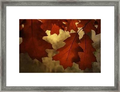 Autumn Light Framed Print by Jackie Schuknecht