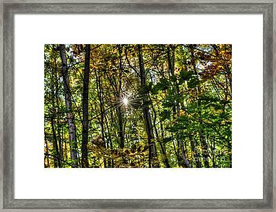 Autumn Lights  Framed Print by Rich Fletcher