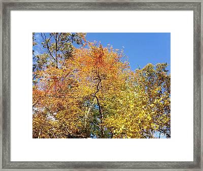 Framed Print featuring the photograph Autumn Limbs by Jason Williamson