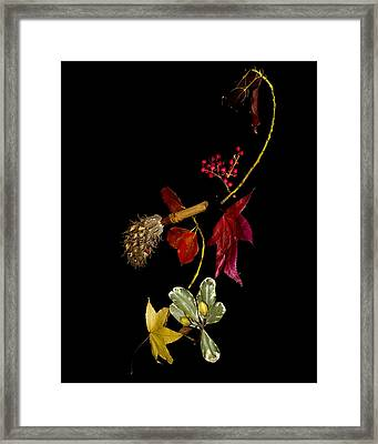 Autumn Line Framed Print by Camille Lopez