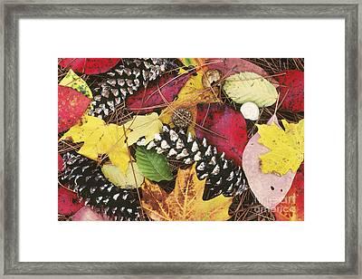 Autumn Litter Framed Print by David Davis