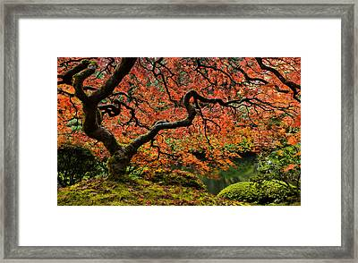 Autumn Magnificence Framed Print
