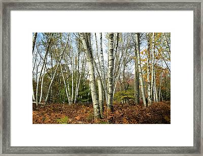 Autumn Majesty - Marion Brooks Natural Area Framed Print