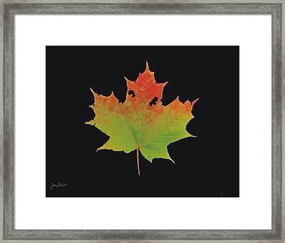 Autumn Maple Leaf 1 Framed Print
