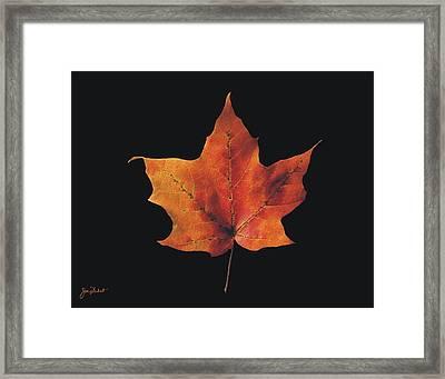 Autumn Maple Leaf 2 Framed Print