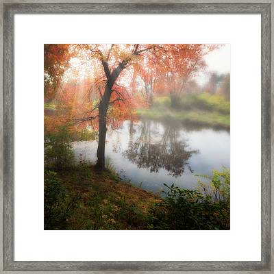Autumn Maple Tree Framed Print by Bill Wakeley