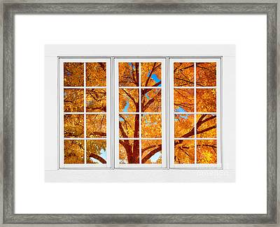Autumn Maple Tree View Through A White Picture Window Frame Framed Print