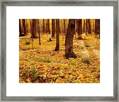 Autumn Maples Framed Print by Tim Hawkins
