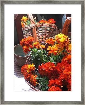 Framed Print featuring the photograph Autumn Marigolds by Deb Martin-Webster