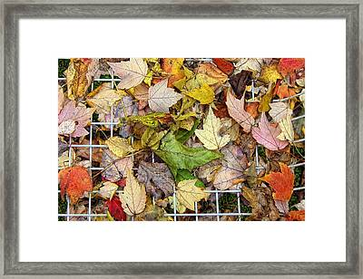 Autumn Medley Framed Print