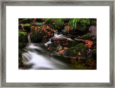 Autumn Melodies Framed Print