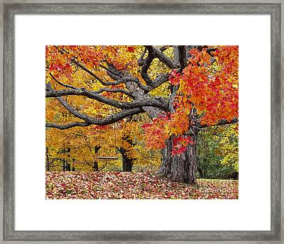 Framed Print featuring the photograph Autumn Memories by Alan L Graham