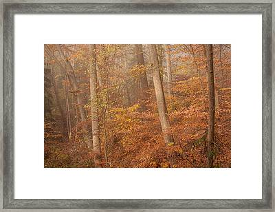 Framed Print featuring the photograph Autumn Mist by Patrice Zinck