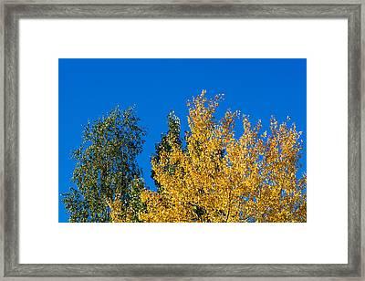 Autumn Mix 2 - Featured 3 Framed Print by Alexander Senin