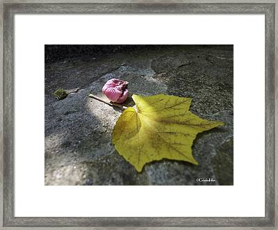 Autumn Moment Framed Print by Columbia Hillen
