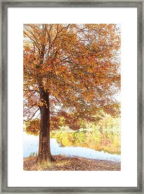 Autumn Moment Framed Print by Karol Livote