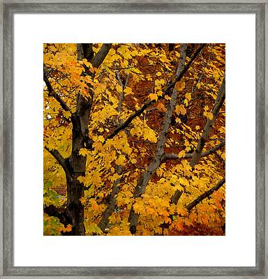 Autumn Moods 21 Framed Print by Rodney Lee Williams