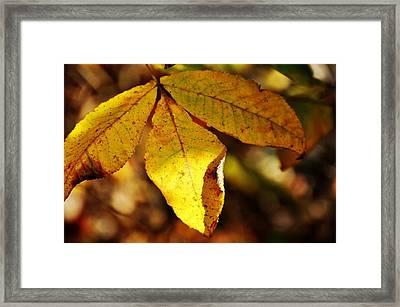 Autumn Moon Framed Print by JAMART Photography