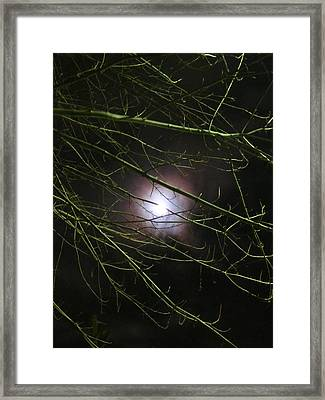 Autumn Moon Peeks Through The Branches Framed Print by Guy Ricketts