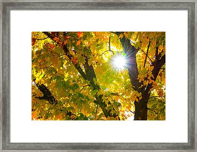 Autumn Morn Framed Print by Dee Dee  Whittle