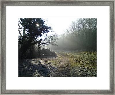 Autumn Morning 2 Framed Print by David Stribbling