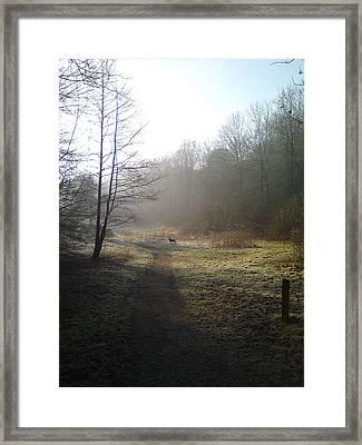 Autumn Morning 4 Framed Print by David Stribbling