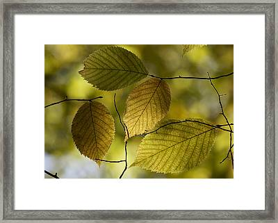 Autumn Mosaic Framed Print by Penny Meyers