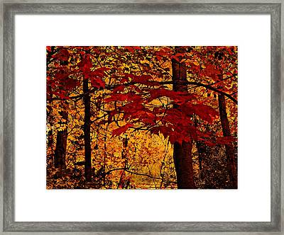 Autumn Mosiac  Framed Print by Dianne  Lacourciere