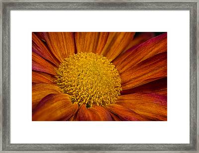 Autumn Mum Framed Print