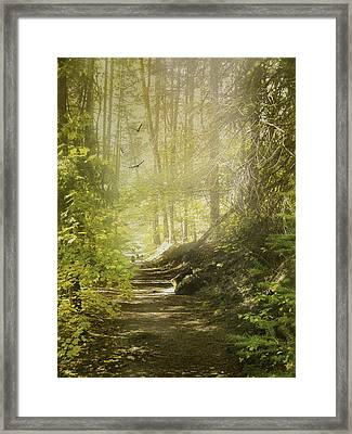 Autumn Myst Framed Print