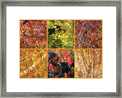 Autumn Nature Collage Framed Print by Carol Groenen