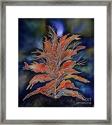 Autumn Nights Framed Print by Ursula Schroter
