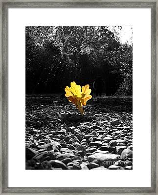 Autumn Oak Isolations Framed Print by Terri Waters