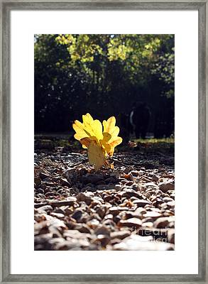 Autumn Oak Framed Print by Terri Waters
