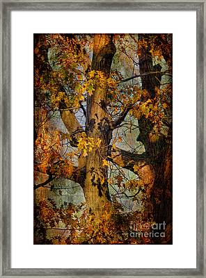 Autumn Oaks In Dance Mode Framed Print by Lois Bryan