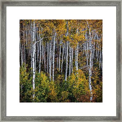 Framed Print featuring the photograph Autumn On Mcclure Pass by Ken Smith