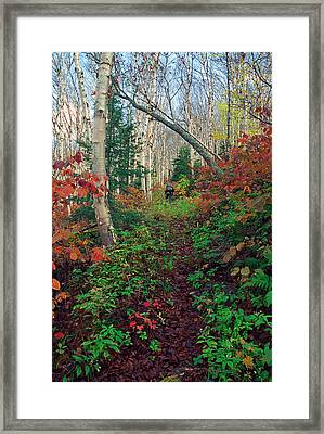 Autumn On Mount Hale Framed Print