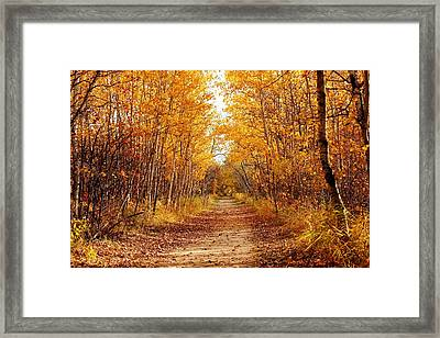 Autumn On The Harte Trail Framed Print