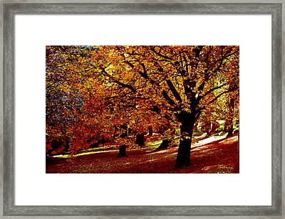 Framed Print featuring the photograph Autumn On Wombat Hill II by Chris Armytage