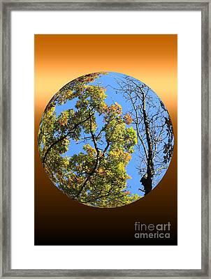 Autumn Opens Up Framed Print by Rick Rauzi