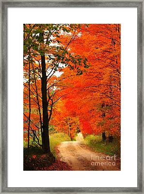 Autumn Orange 2 Framed Print by Terri Gostola