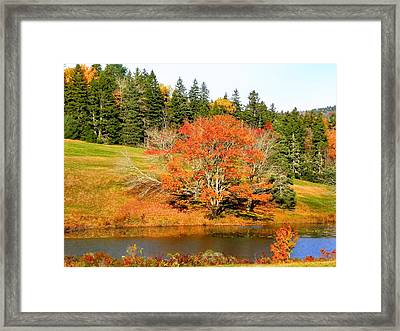 Framed Print featuring the photograph Autumn Orange by Gene Cyr