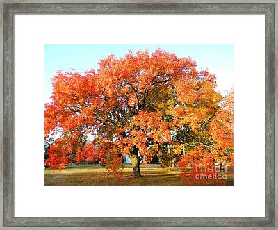 Autumn Orange Framed Print