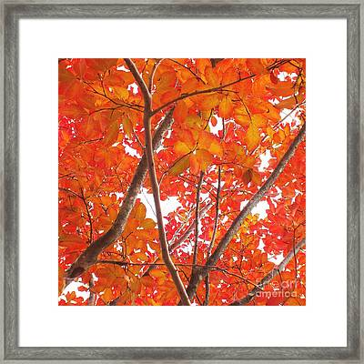 Autumn Orange Framed Print by Scott Cameron