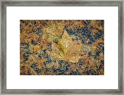 Autumn Palette Framed Print by Roxy Hurtubise