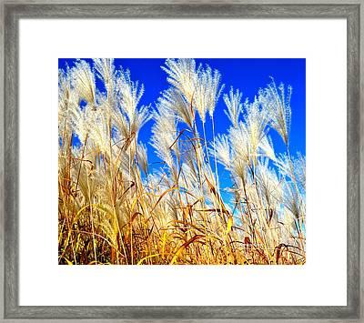 Autumn Pampas Framed Print
