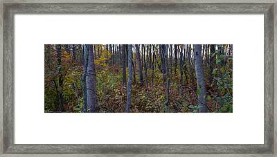 Autumn Panorama Framed Print by Jacqueline Milner