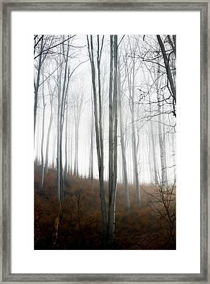 Autumn Pastel Framed Print by Ioana Todor