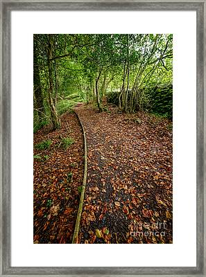Autumn Path Framed Print by Adrian Evans